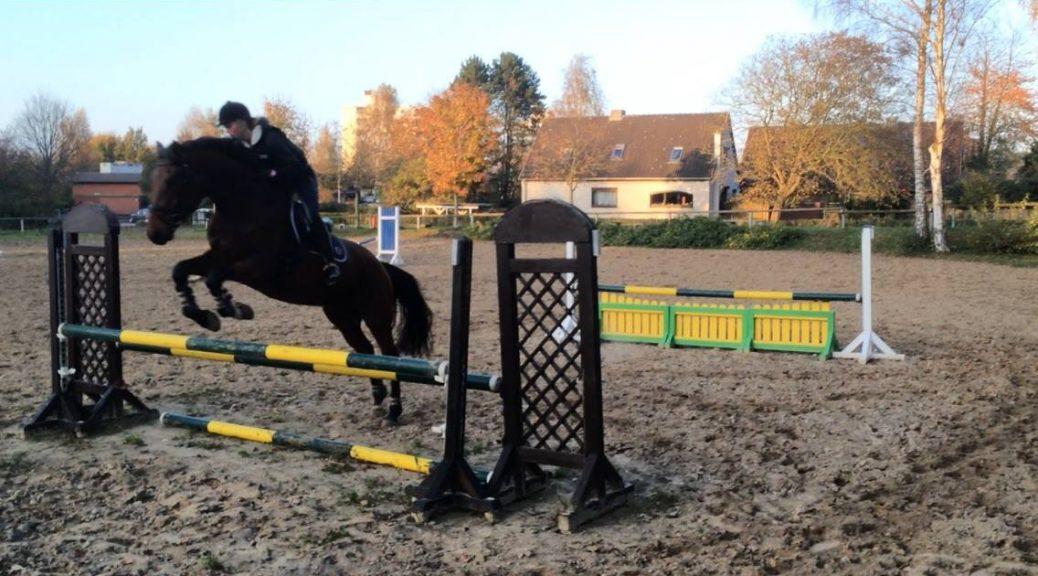 Alles Gute und viel Erfolg! Holsteiner Pferde 10861007 906848309354695 7083928891278134652 o