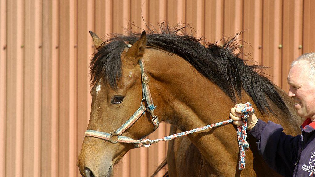 2. jährige Stute von Numero Uno andresen, arbeit, ausgestatet, diarado, edel, erwartet, freuen, geicht, harald, holsteiner, Holsteiner Pferde, Horses, infos, langbeinig, numero, pferdeverkauf, pferdezucht, ruhe, schönem, sonne, sprung, stute, traumpferd, verkaufspferde, zeit DSC 6079